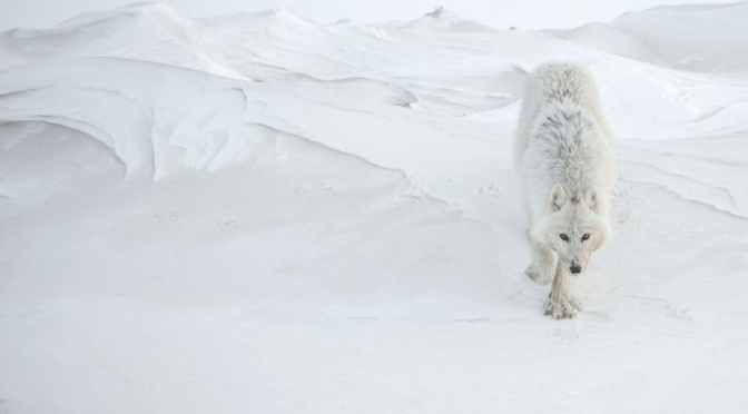 VINCENT MUNIER / PHOTOGRAPHE ANIMALIER