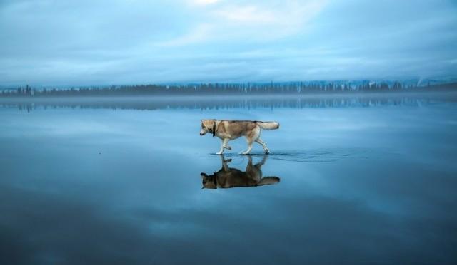 "PHOTOGRAPHE RUSSE "" Fox Grom"""